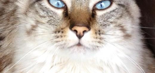 Mon chat Léo